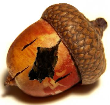 Why ACORN Fell: The New York Times, Lies and Videotape