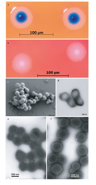 Scientists Create First Self-Replicating Synthetic Life