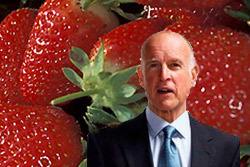 Coalition Sues California Over Approval of Cancer-Causing Strawberry Pesticide .