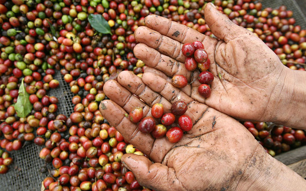 Germans Find Cocaine in the Coffee Beans